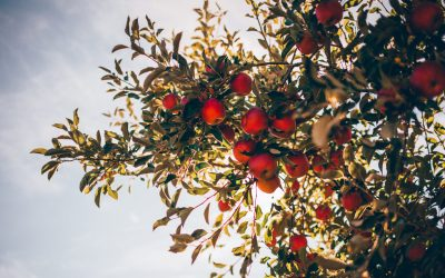 Applefest – September 18th 2016